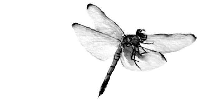 imagen-monika-aranda